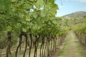 North East Italy Wine Tasting @ Landmark Arts Centre