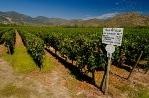 Richmond Wine Society - Chile - A Rich Diversity @ The Britannia