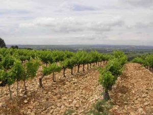 Teddington Wine Society Châteauneuf du Pape and the Rhone Valley @ Home | England | United Kingdom