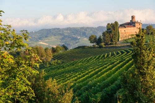 Northern Italian Wine Tasting Online