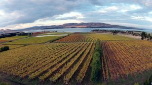 Teddington Wine Society - the wines of Tasmania @ Landmark Arts Centre