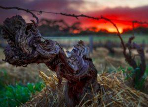 Fine Wine Tasting of wines of Henschke @ by Zoom | Twickenham | United Kingdom