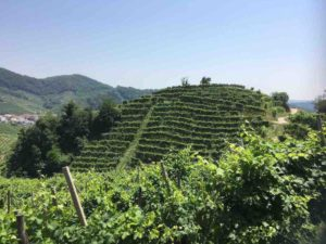 Richmond Wine Society explores Norther Italy @ The Britannia Pub