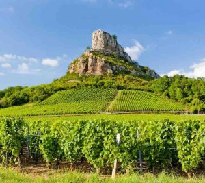 Richmond Wine Society - the wines of Southern Burgundy - places available on Monday 7th @ The Britannia Pub