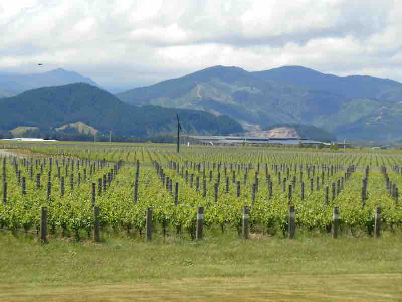 The Wines of New Zealand – online!